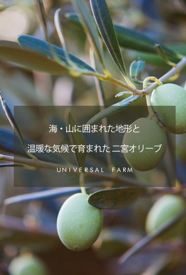 universal_sp_top.jpg